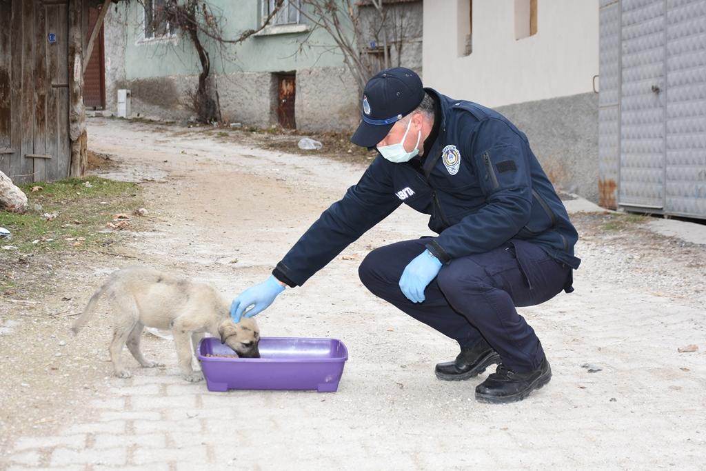 İnönü Belediyesi sokak hayvanlarına umut olmaya devam ediyor
